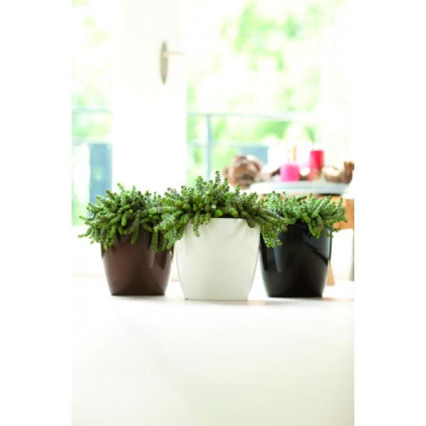 Pot plante brussels diamond rond 20 5 cm x 22 cm blanc for Plante xiaomi